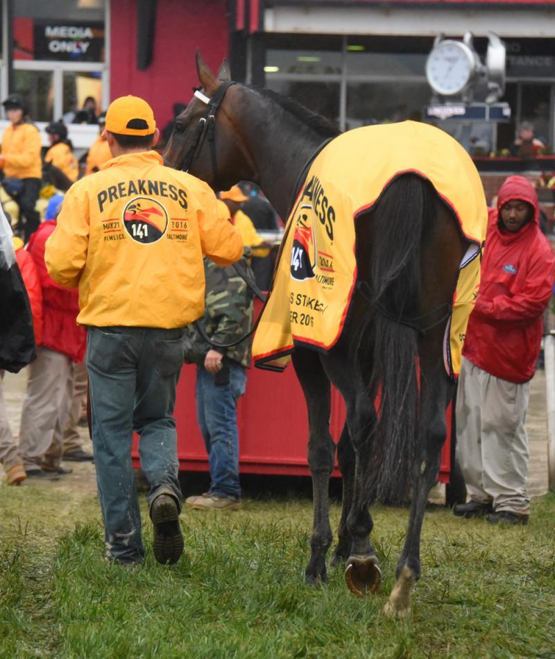 Exaggerator (Ronnie Betor/Horsephotos.com)