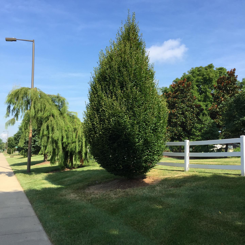 grounds tree