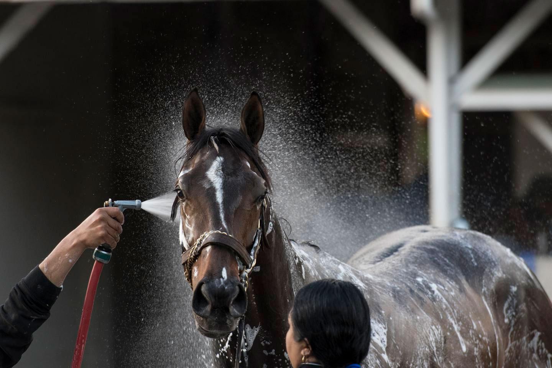 derby-bathing-9