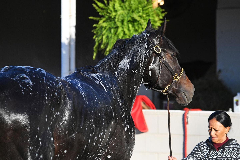 derby-bathing-7