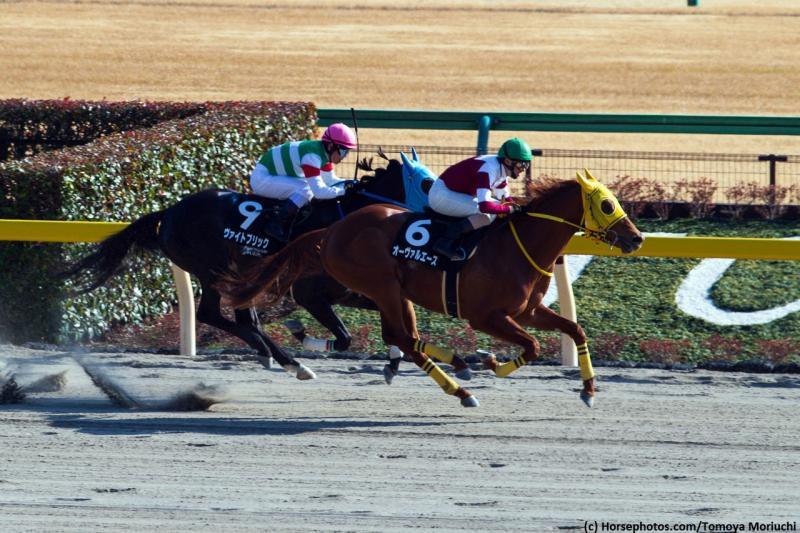 Oval Ace (c) Horsephotos.com/Tomoya Moriuchi