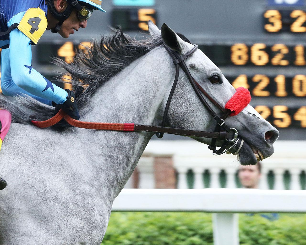 A-LITTLE-BIT-OF-ME---The-Unbridled-Sydney---9th-Running---05-02-19---R10---CD---Finish-03