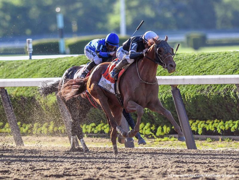 SIR WINSTON (Horsephotos.com)