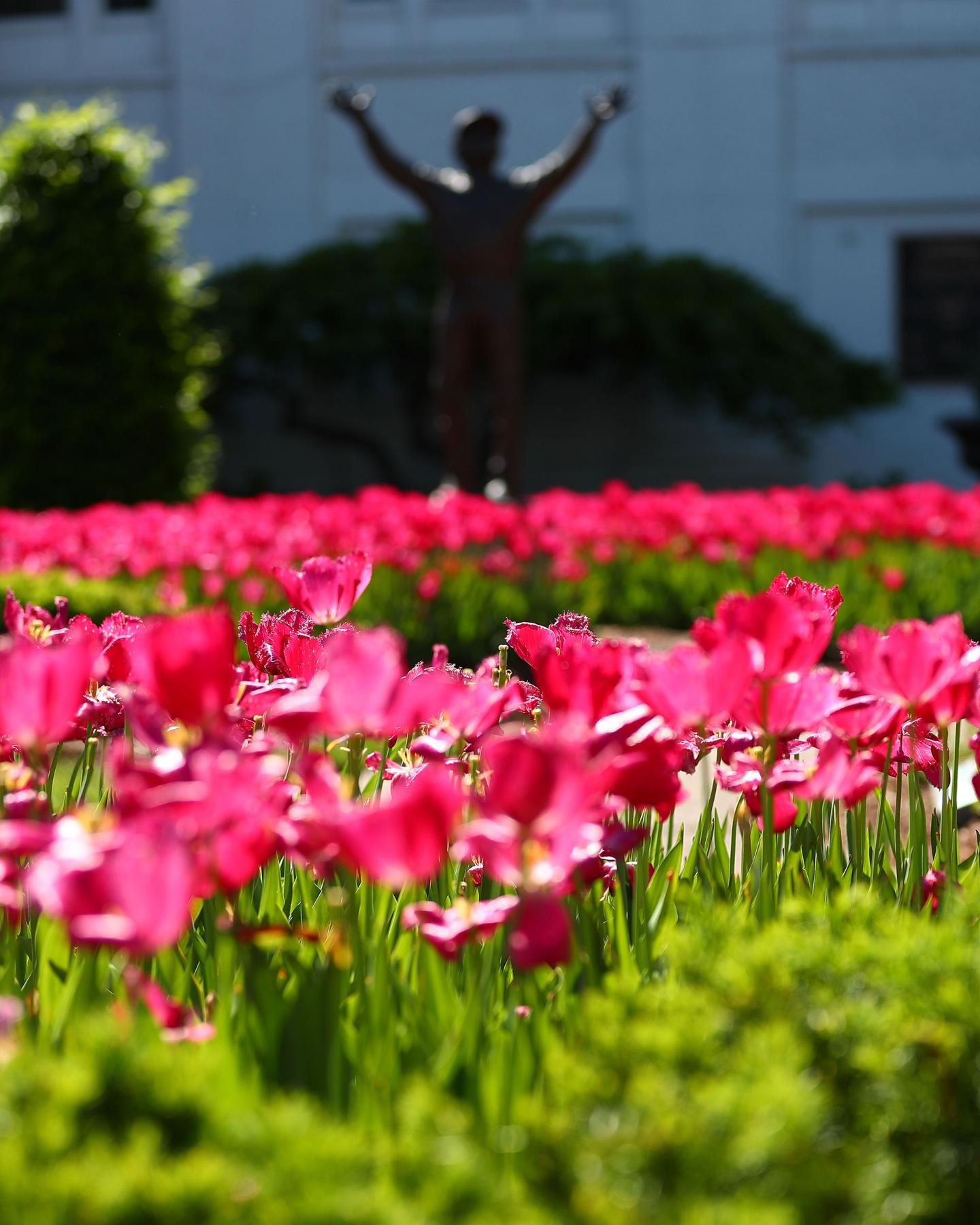Scenics----Oaks-Day---CD---Tuleps---043021---002