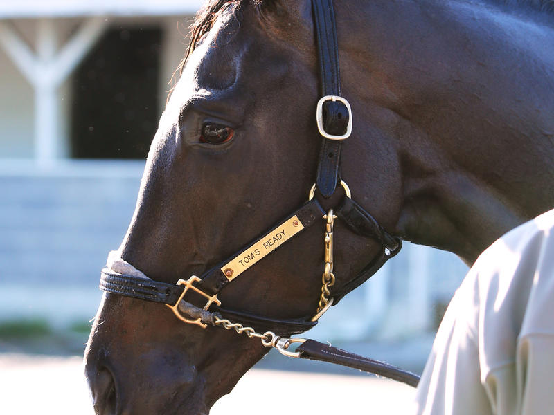 Kentucky Derby Contender Tom's Ready Works Five Furlongs