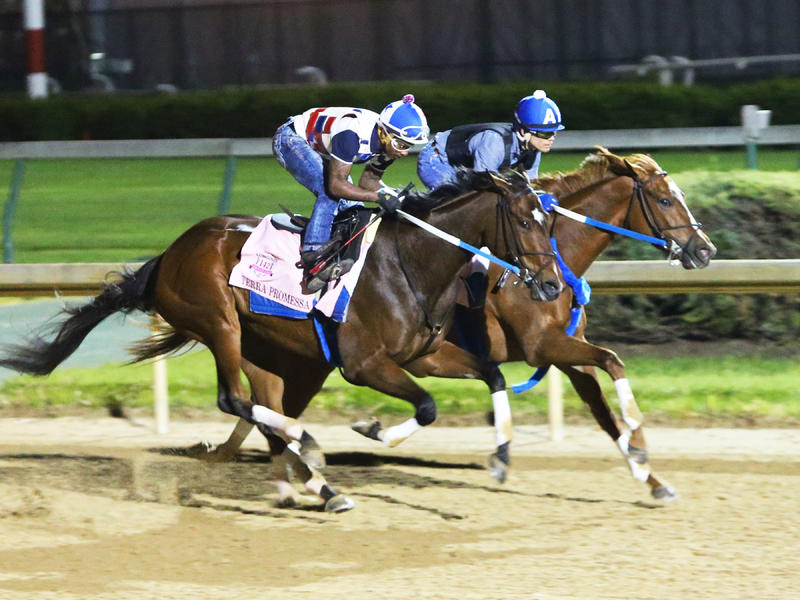 Five Asmussen Oaks Hopes, Carina Mia Work on Monday