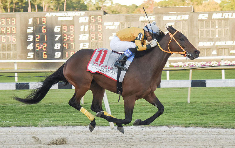King Guillermo wins the 2020 Tampa Bay Derby