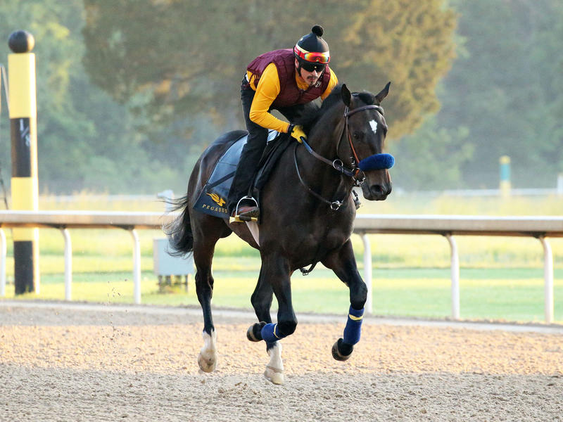 Anneau d'Or gallops at Oaklawn Park (Coady Photography)