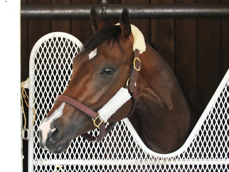 Omaha Beach is one of two colts sired by War Front expected to start in the Kentucky Derby