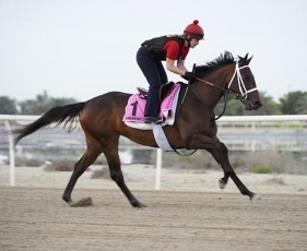 Frank Conversation faces unbeaten filly Polar River in UAE Derby