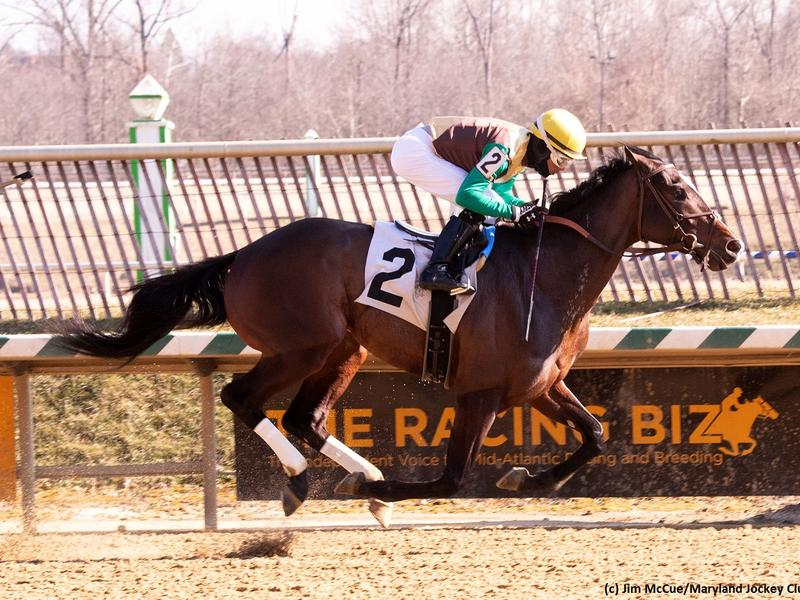 Alwaysmining captures the Miracle Wood Stakes at Laurel Park