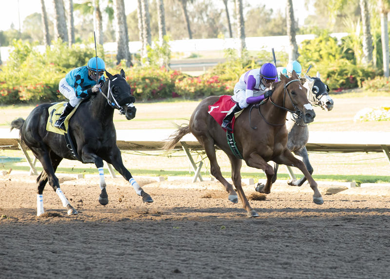Sheer Flattery, Ann Arbor Eddie highlight El Camino Real Derby