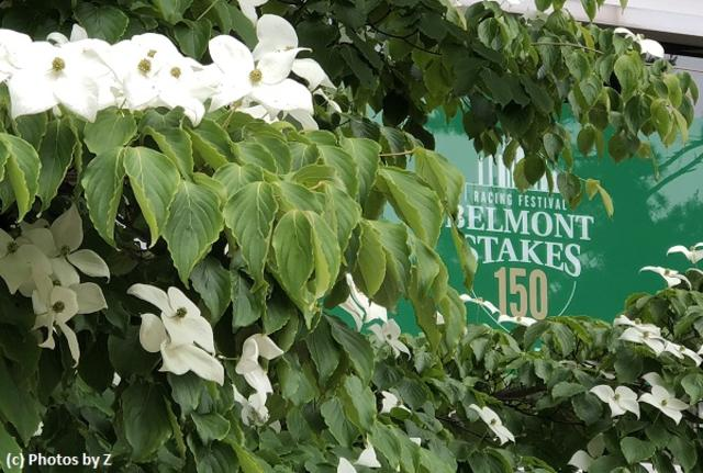 2018 Belmont Stakes Study… News Image