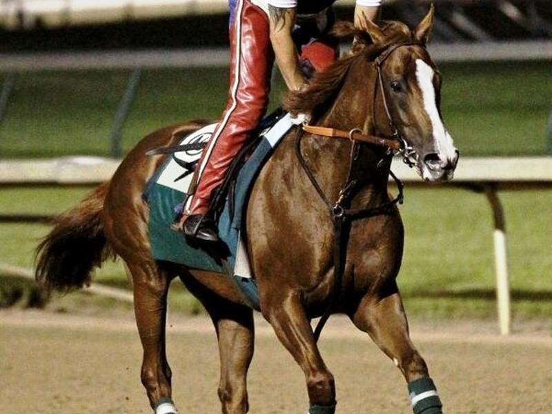 California Chrome named 2016… News Image