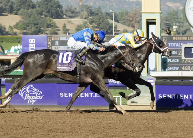 Classic Empire reigns in Breeders'… News Image