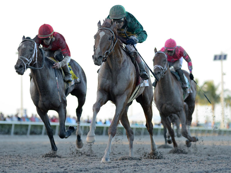 Code of Honor (right) holds off Bourbon War (left) to take the Fountain of Youth Stakes (G2)
