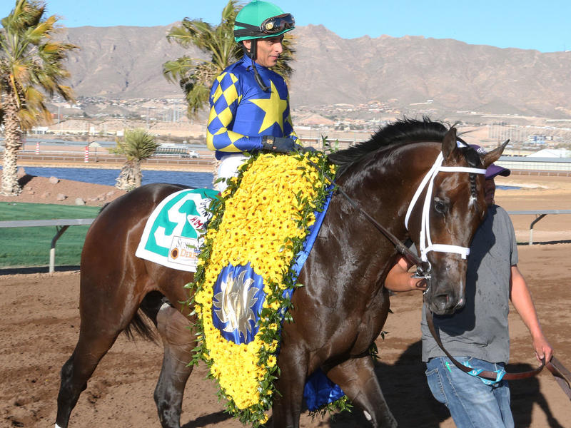 Cutting Humor enters the Sunland Park Derby winner's circle
