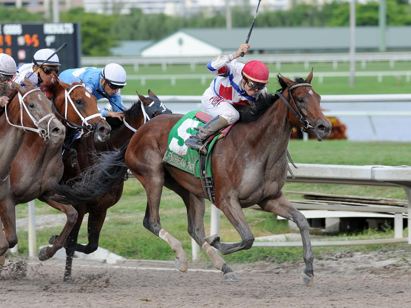 Delta Downs Princess attracts… News Image