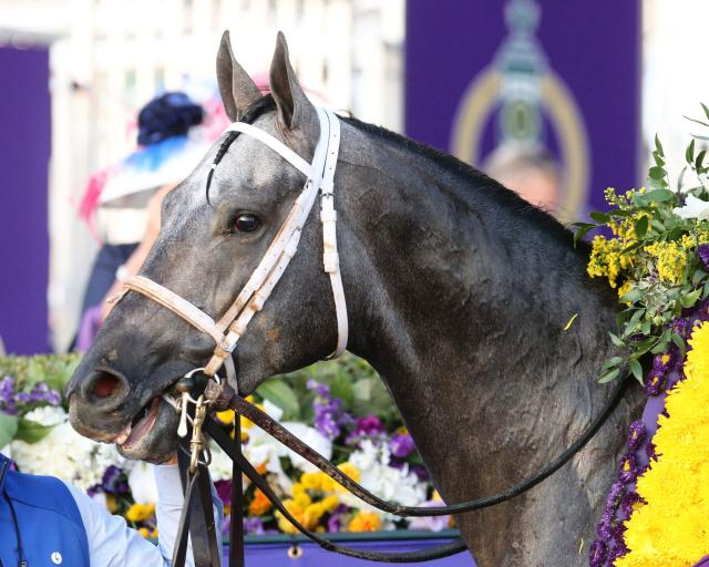 Essential Quality at the Breeders' Cup (Coady Photography)