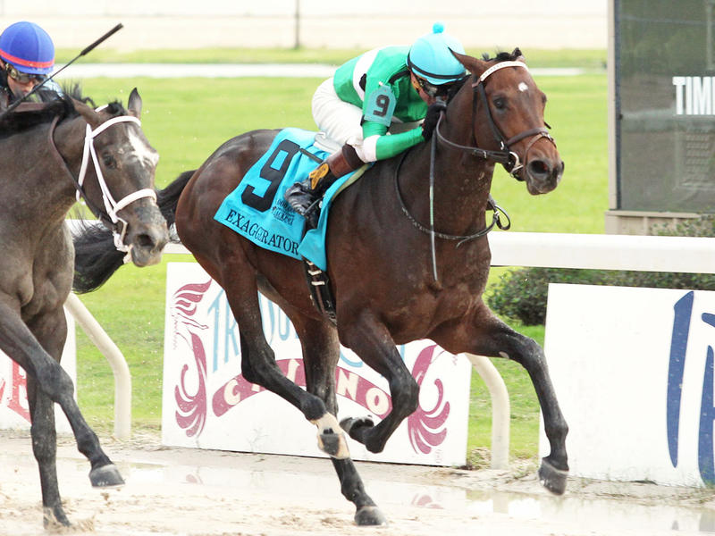 ​Exaggerator edges Sunny Ridge in Delta Jackpot, jumps to second on Kentucky Derby Leaderboard