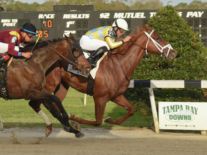 Kentucky Derby Horse Profile: Flameaway