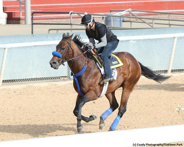 Galilean galloping at Oaklawn Park