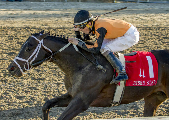 5 Fast Facts: Risen Star Stakes News Image