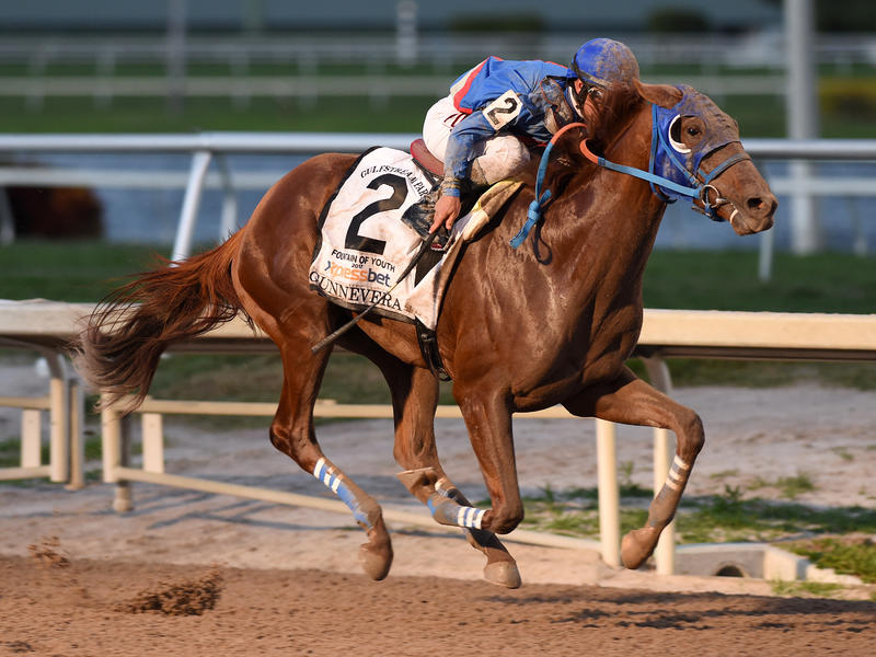 Gunnevera romps in Fountain of Youth as Irish War Cry fades