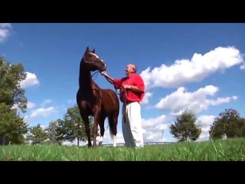 Kentucky Derby 2016: Ep. 3 - The Early Stars of the Next Derby