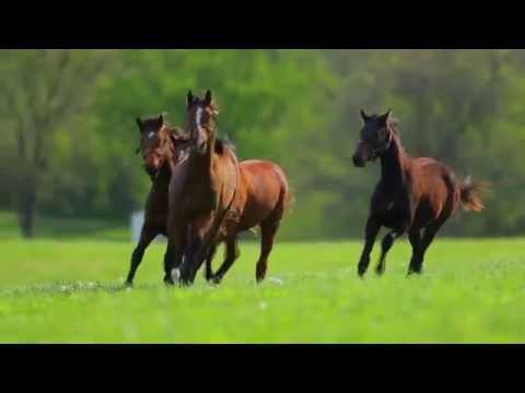 Kentucky Derby 2016: Ep. 2 - Breeders' Cup: American Pharoah hands off to a new generation