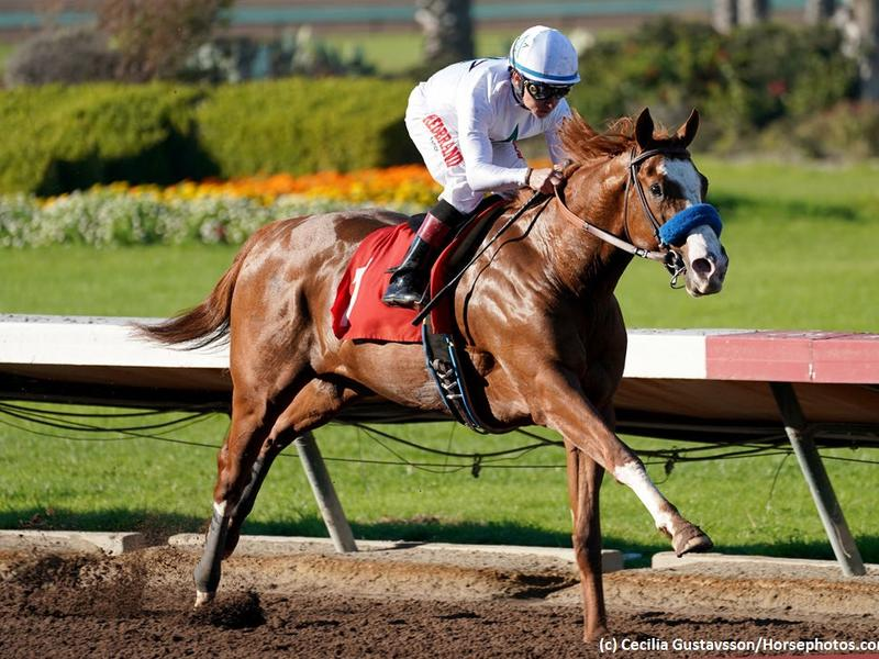 Road to the Kentucky Derby Horse Profile: Improbable