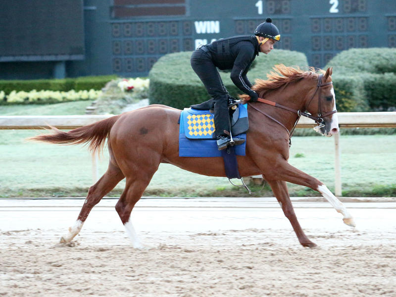 Improbable galloping at Oaklawn Park