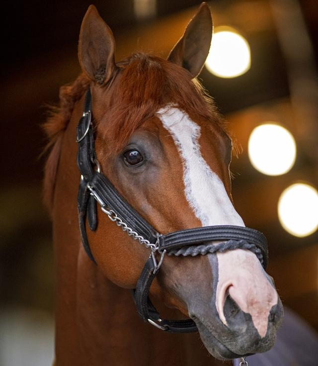 Justify honored as Horse of… News Image