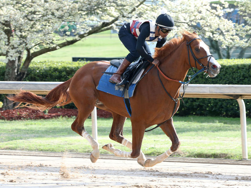 Laughing Fox works at Oaklawn Park ahead of the Oaklawn Invitational