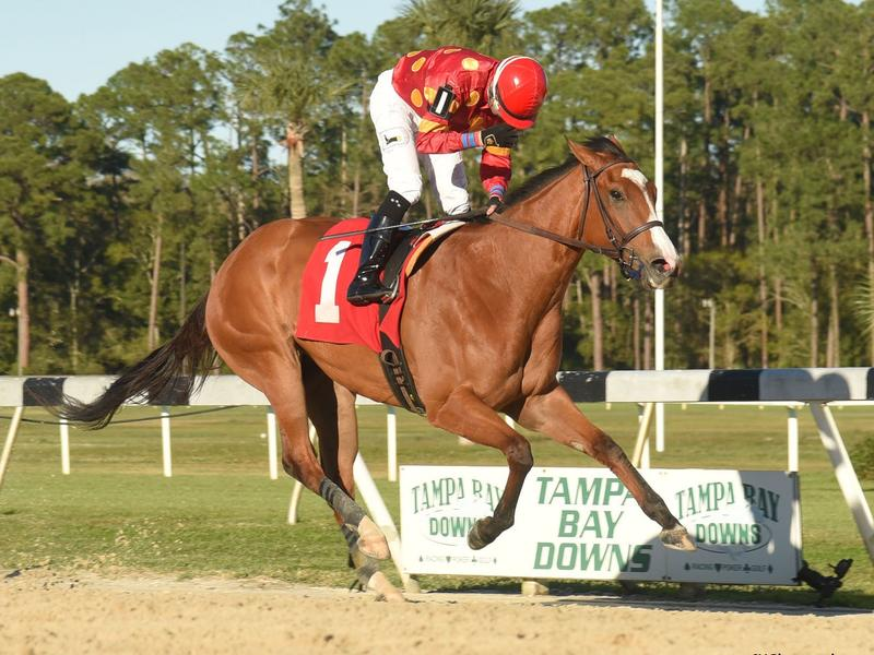 Lucrezia wins the Suncoast (SV Photography)