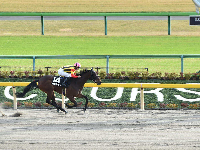 California-bred Make Happy beats boys as heavy favorite in Cattleya Sho