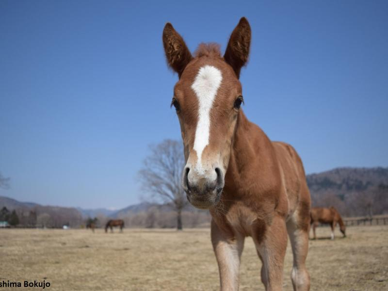 Master Fencer as a foal