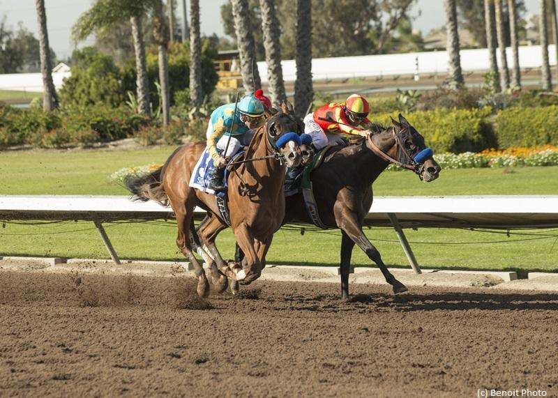 Los Alamitos Futurity Review: Controversial disqualification of a fast winner