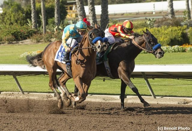 Rebel attracts 11-strong field News Image