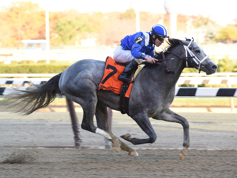 Mohaymen looking to stay perfect in Holy Bull