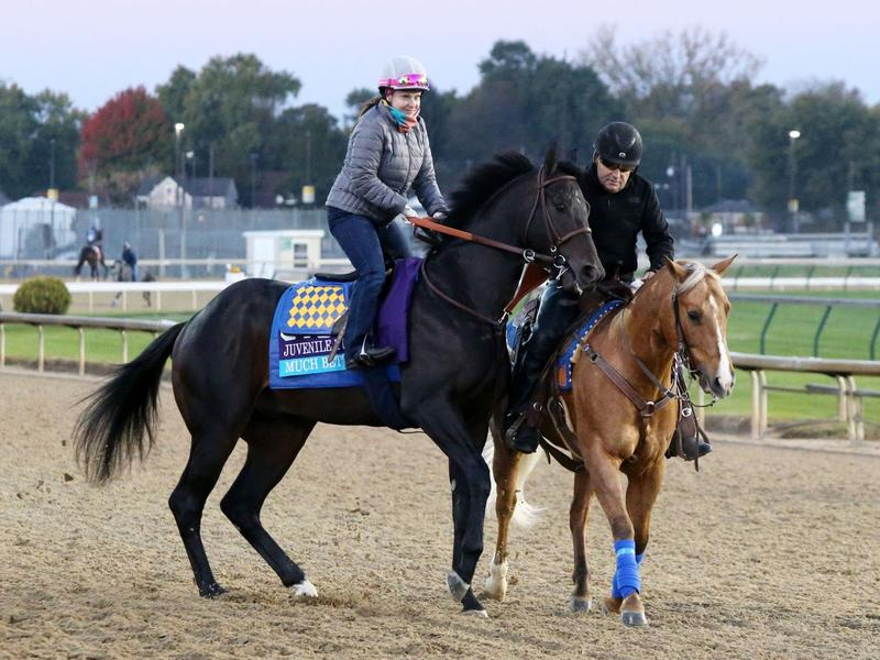 Coliseum looks to join Kentucky Derby trail in Sham