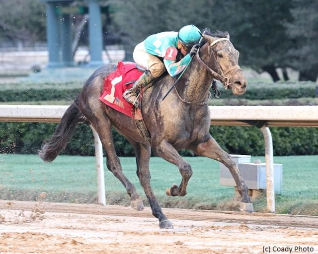 Kentucky Derby Horse Profile: My Boy Jack