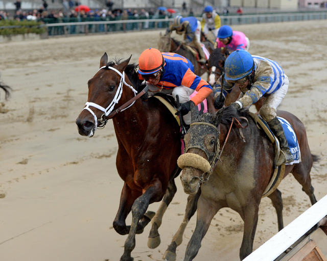Outwork hangs on over maiden… News Image