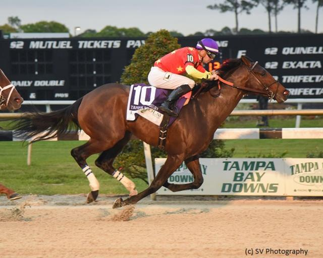 Quip offers proper response in Tampa Bay Derby upset