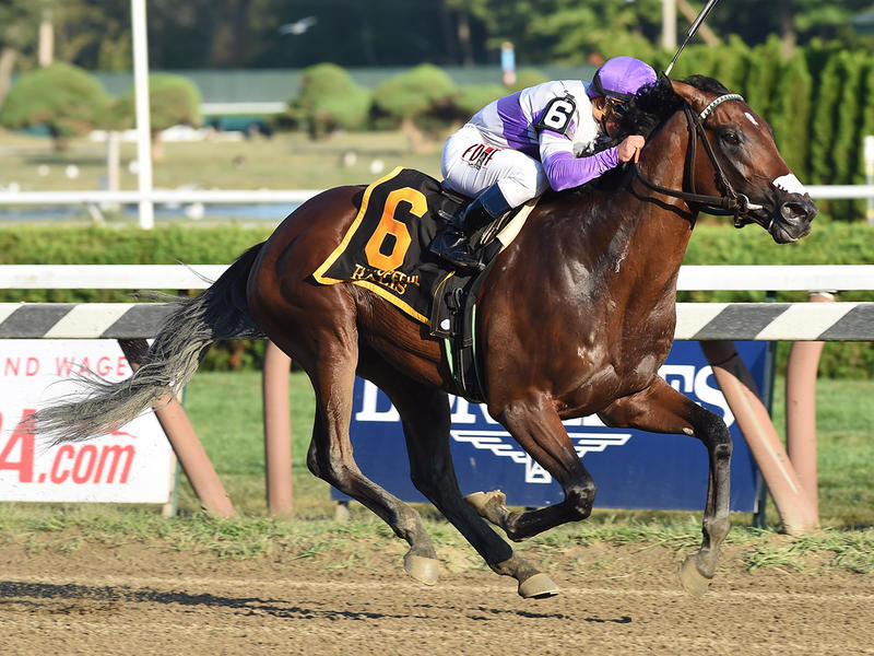 Breeders' Futurity & Champagne in the Road to the Kentucky Derby spotlight