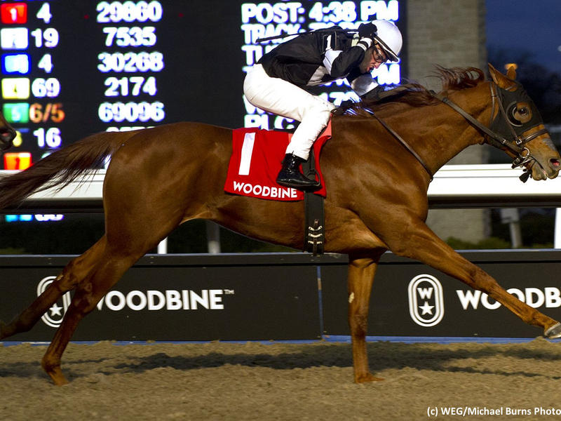Sir Winston wins the 2018 Display Stakes at Woodbine