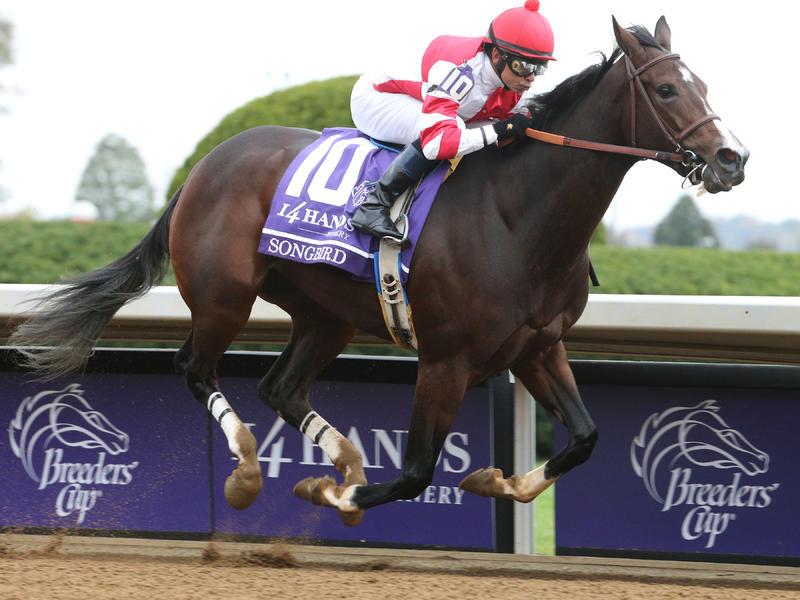 Songbird a potential wildcard for 2016 Kentucky Derby