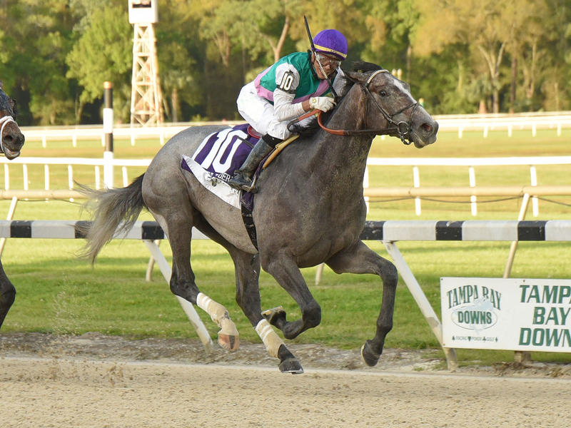 Tacitus winning the 2019 Tampa Bay Derby