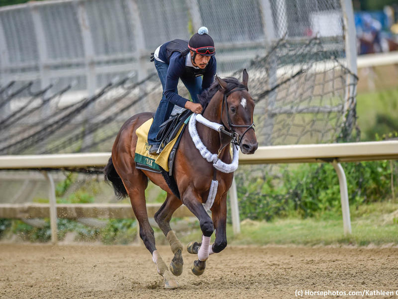 Tax readies for the 2019 Belmont Stakes