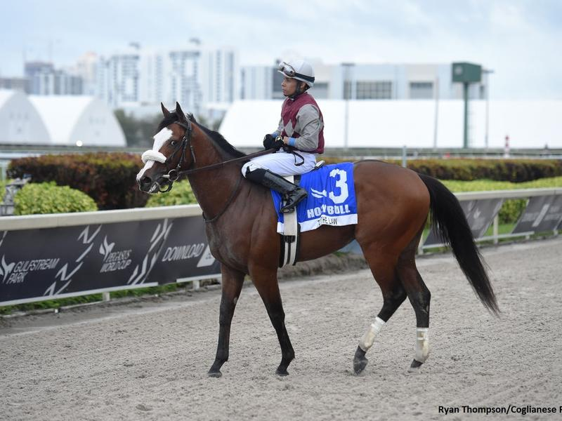 Tiz the Law at Gulfstream Park